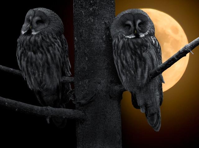 Owl CC0
