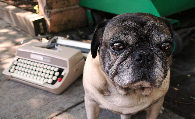 A Pug is an essential writing accessory.