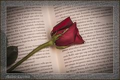 Books & Roses - Sant Jordi