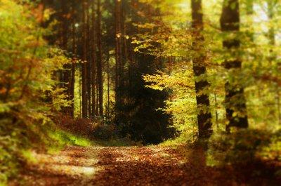 yellow_wood