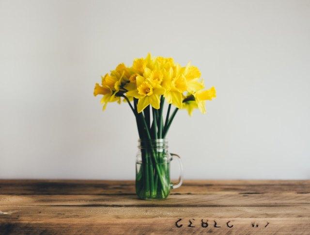 Daffodils_annie-spratt-197098
