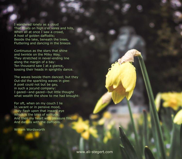 Daffodils_Poem_stefanos-kogkas-259457